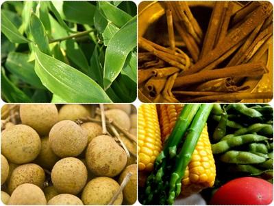 10_生薬と野菜と笹