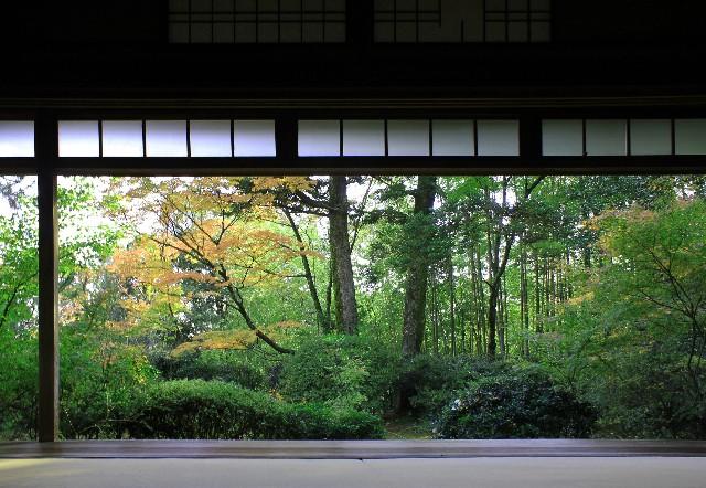 日本庭園_竹